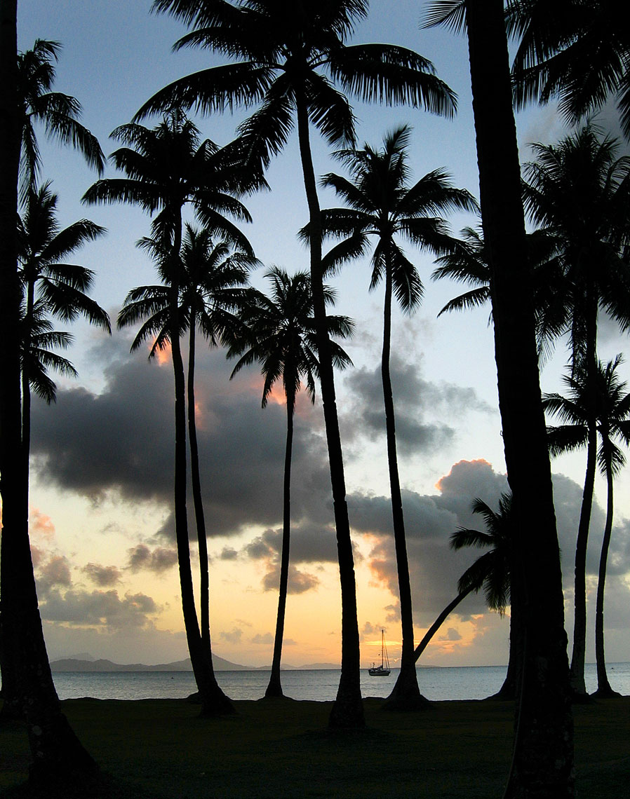 Palm trees/Silouette/Sunsett/Location photography
