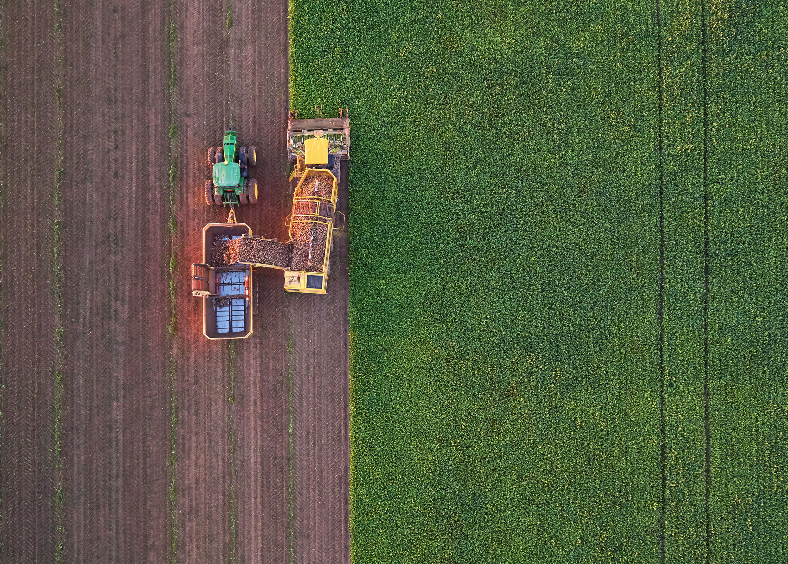 Sugar beet harvest/Michigan/arial drone photography