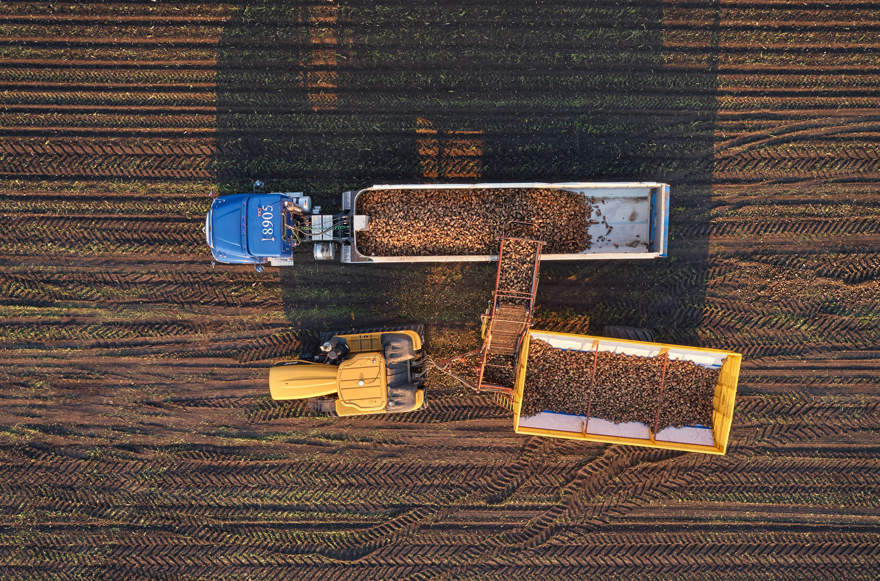 Sugar beet harvest/transport truck/loading/arial drone photography