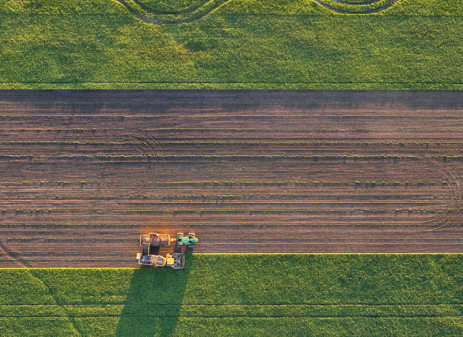Sugar beet harvest/field empty middle/arial drone photography