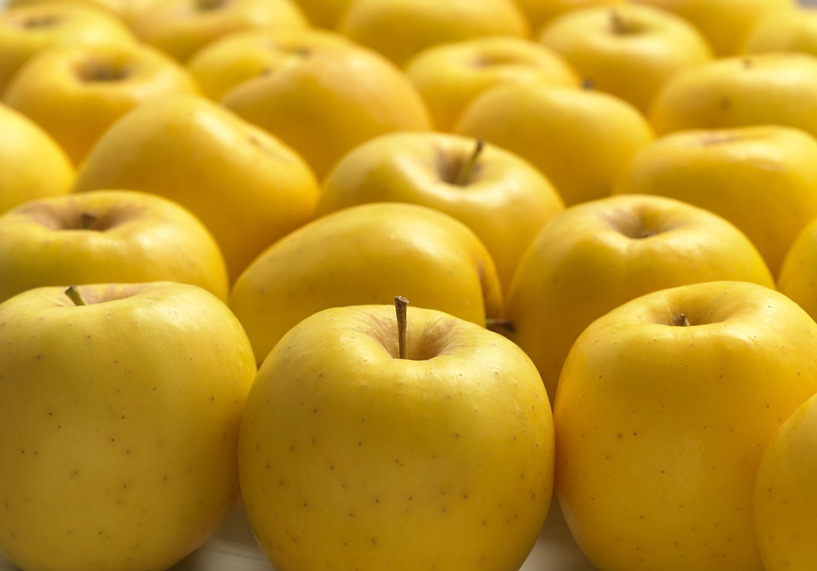 Yellow apples/many apples lined up in rows/ food photography