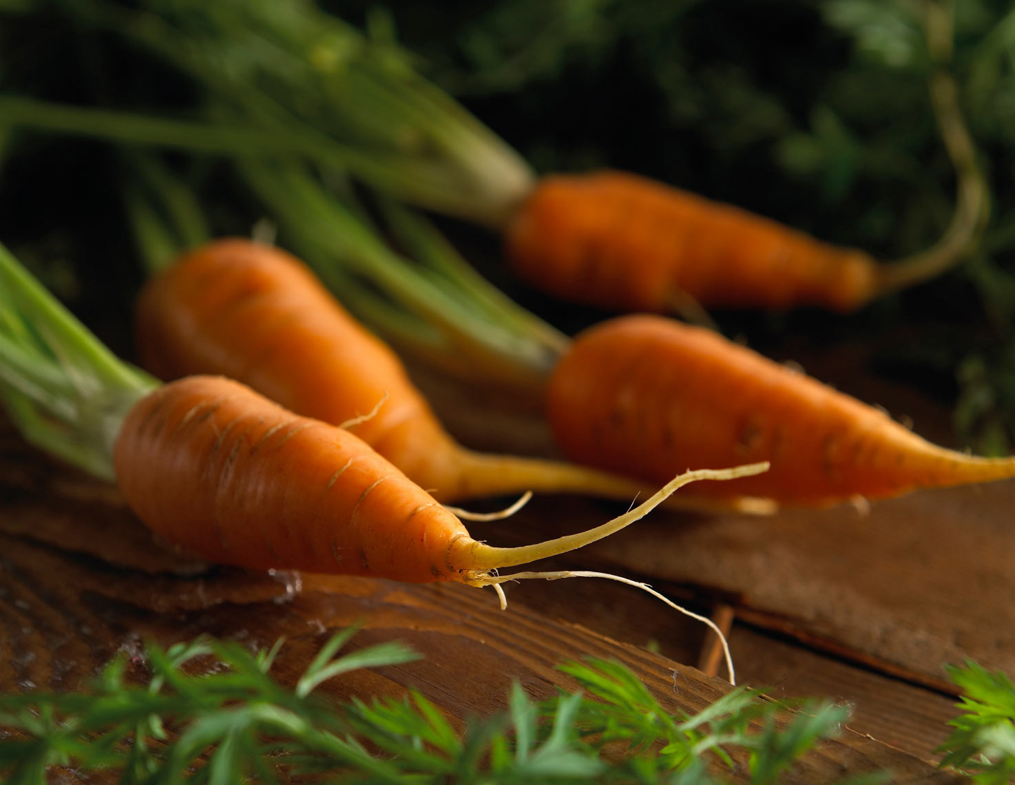 Carrots/group/old brown barnwood/agriculture photography