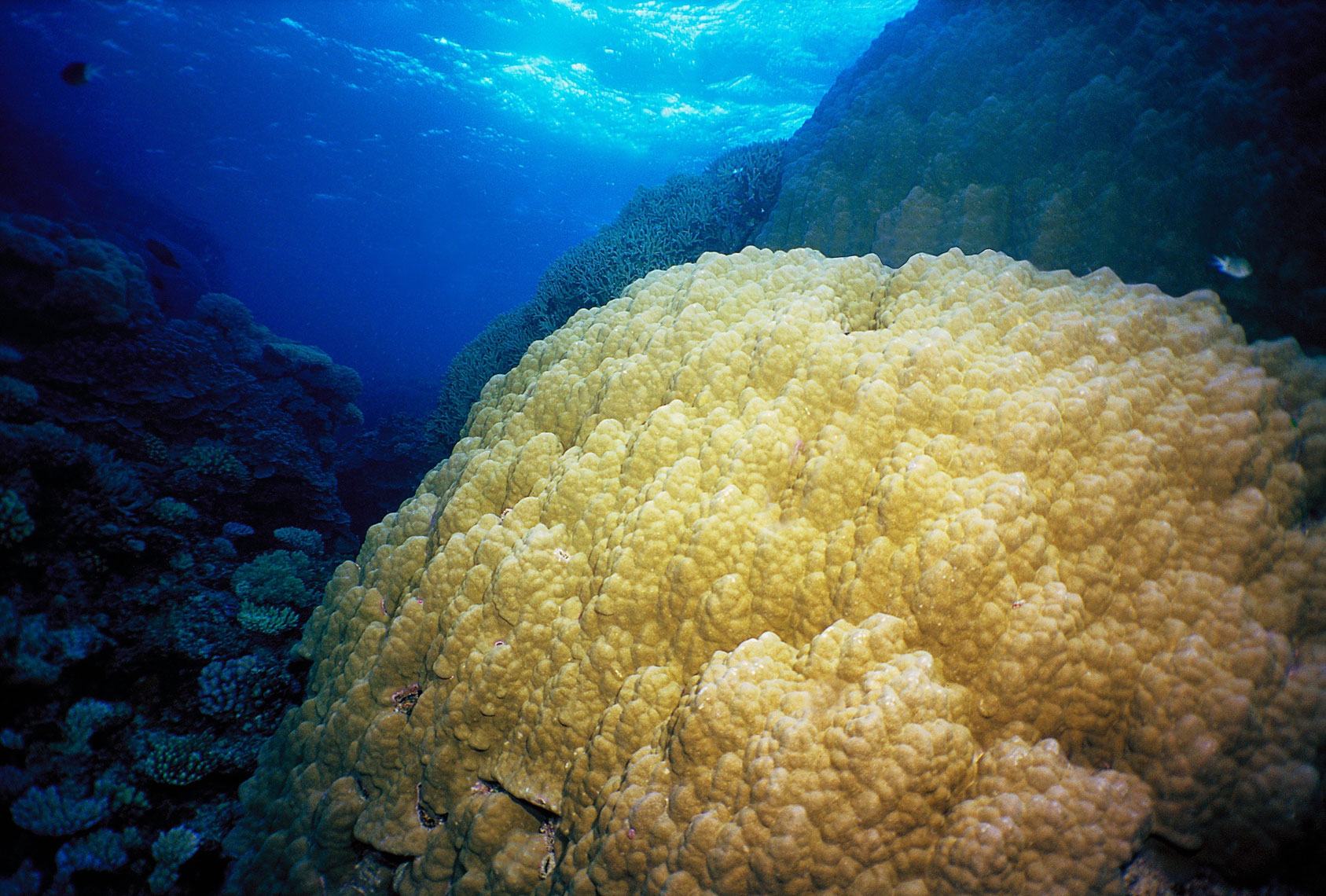Coral head/Great Barrier Reef/underwater photography