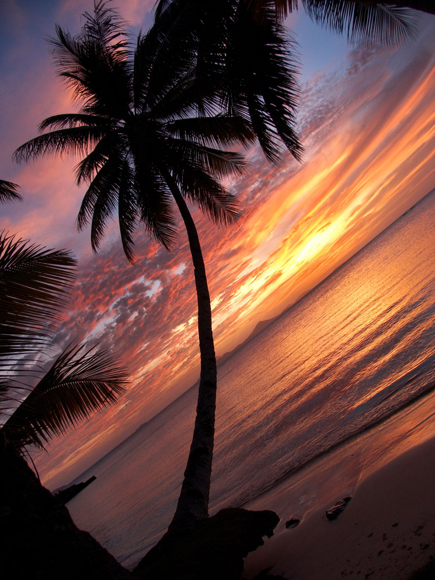 Palm Tree/Silhouette/ocean/sunset/locaton photography